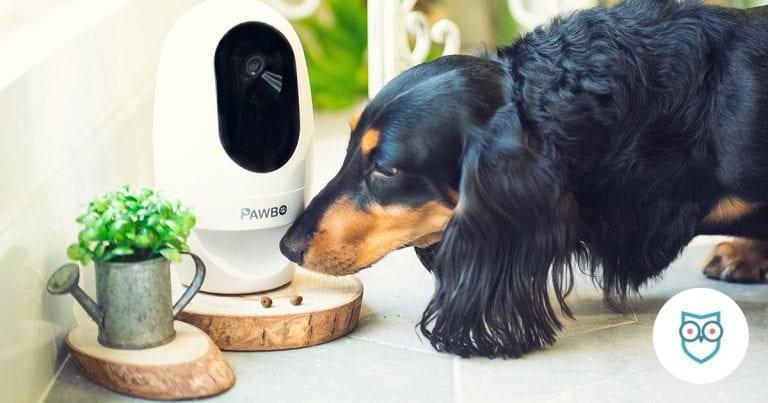 Interactive Pet Cameras
